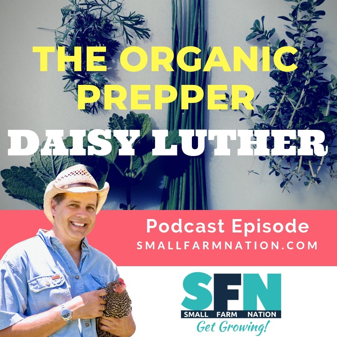 Daisy Luther | The Organic Prepper | Survival Mom | Homesteading