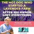 The Hot Dog Who Started a Lavender Farm After His Owner Lost Everything-min
