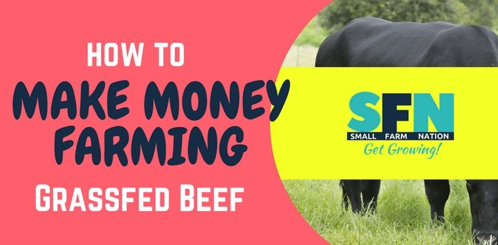 How to Make Money Farming Grass-Fed Beef