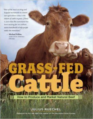 grassfed-cattle