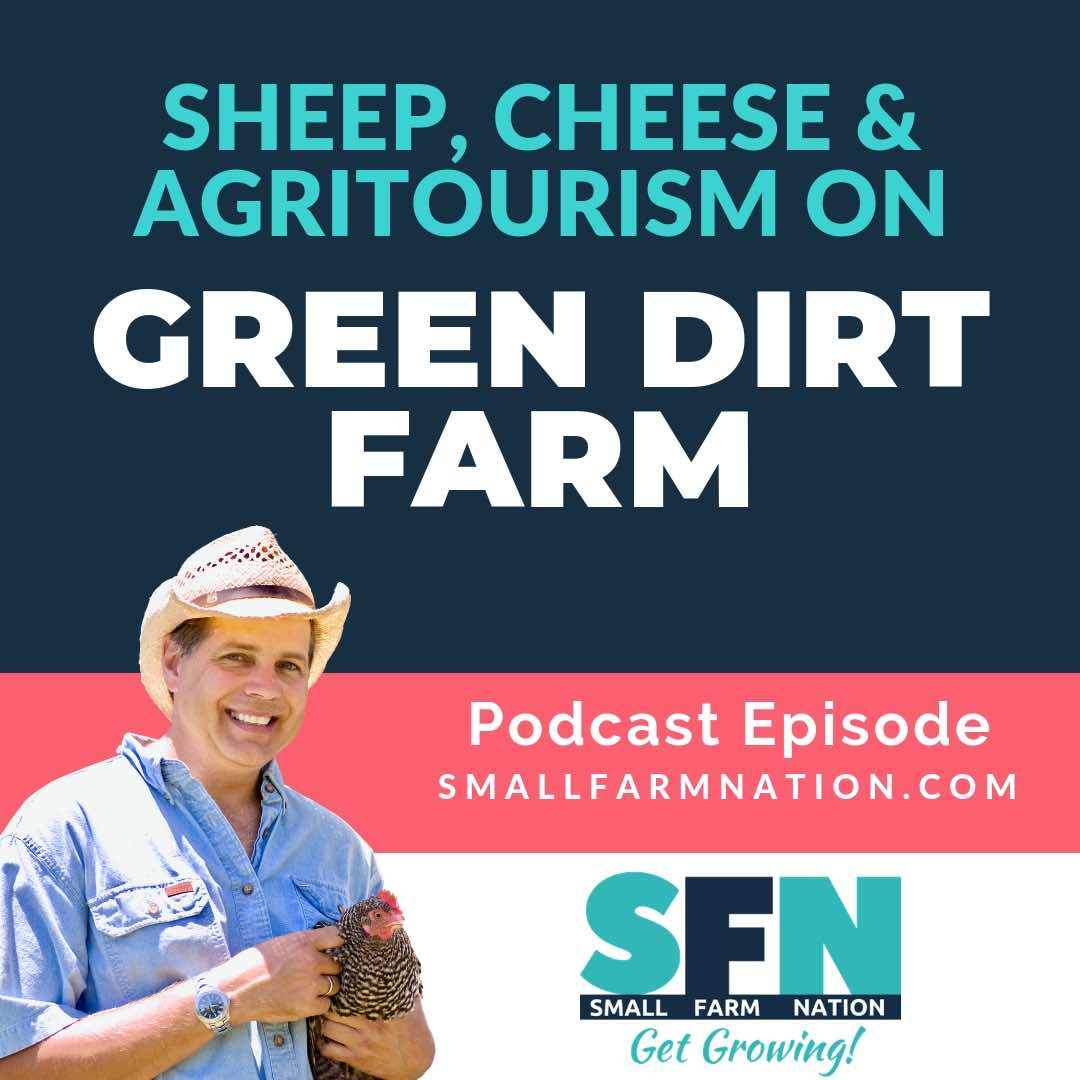 Sheep, Cheese & Agritourism on Green Dirt Farm