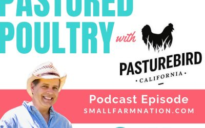 How to Scale Up Pastured Poultry