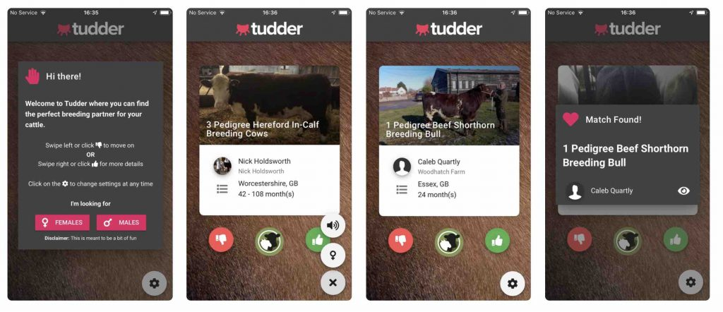 cow dating app