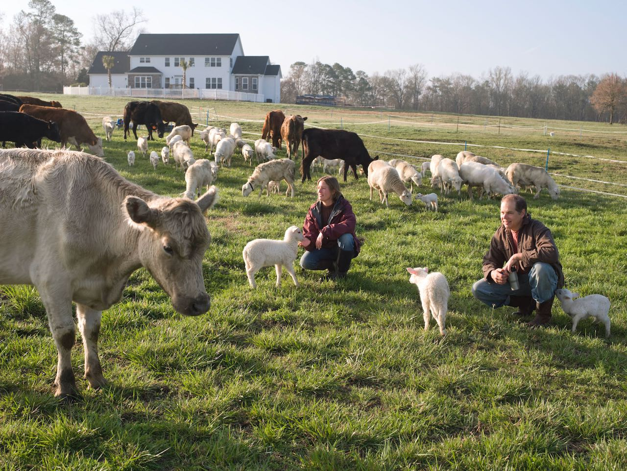 Multi-Species Rotational Grazing to Maximize Food and Income, Part 2